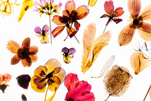 Flowes And Petals On The White Background