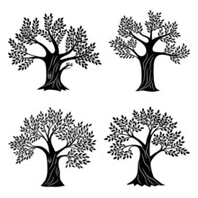 Living Trees Silhouettes. Minimalistic Genealogical Tree Set With Foliage, Life Education And Health Symbols For Company Logo, Oak Or Olive Painting Wood Graphics