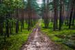 leśna droga i zielony mech forest road and green moss