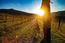 Vigne - Paesaggio - Piemonte - Langhe - Mango - Italia