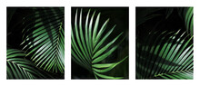 Palm Leaf. Tropical Plants. Nature Green Color Background.