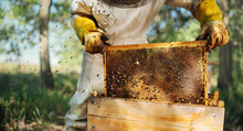 The Beekeeper Pulls Out A Frame With Honey From The Beehive.