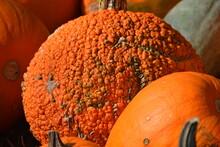 Red Warty Pumpkin