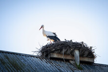 Stork On The Roof In Viby, Sweden