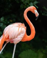 Walking Flamingo