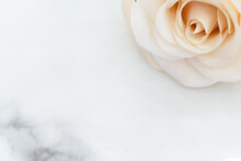Peach Colored Roses With Petals On A Marble Background