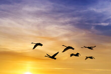 Group Of Birds Flying Against Evening Sunset In The Background