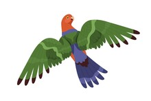 Australian King Parrot Flying With Spread Wings. Tropical Bird With Long Tail. Exotic Birdie With Colorful Feathers. Realistic Flat Cartoon Vector Illustration Isolated On White Background