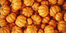 Festive Pumpkins Harvest Pattern. Heap Of Ripe Orange Pumpkin Vegetables Autumn Background For Halloween Holiday. Illustration.