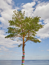 Alone Pine Tree Decorated With A Multicolored Striped Carpet Grows On The High Shore Of The Lake Against The Sky.