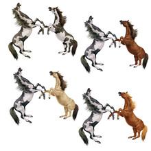 Cheval, Combat, Animal, Illustration, Cavalier, Art, Saut, Sauvage, étalon, équitation, Course, Mammifère, Sautant, Galop, Animal De Compagnie ,bagarre