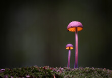 Mushrooms In The Forest
