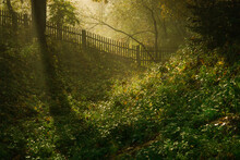 The Secret Garden. Old European Garden Covered With Early Sunlight Piercing Through Morning Fog. Autumn Scenery With Old Wooden Fence And Wild Ivy.