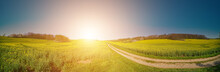 Panorama Of Green Field With Dirt Road And Sunset Sky. Summer Rural Landscape Sunrise