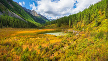 Sunny Autumn Swamp. Swampy Backwater Of Mountain Lake. Yellow Atmospheric Natural Background Of Highlands.