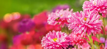 Bee Flying Towards Colorful Flowers In The Garden