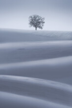 Lonely Tree In Snowy Field With Hills