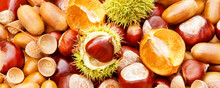 Autumn Fruits With Chestnuts And Acorns Closeup