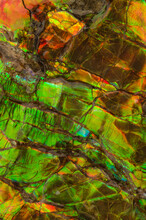 From Above Texture Of Ammolite Fossil