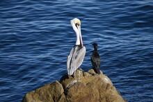 Bird Perching On Rock By Lake