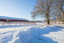 Beautiful Winter Landscape View. Group Of Horses On Rest In Winter Field.  Sweden.