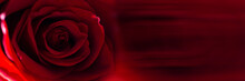 Red Rose Flower Bud Close-up Background Texture. Panoramic Banner.