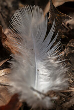 Lost Feather In The Forest