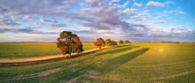 Autumn Rural Panorama. Fall Colors Beautiful Trees Dirt Road Agriculture Fields. September Sunny Morning.