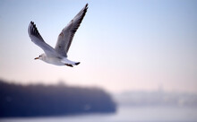 Seagull Flying Over The Sea Against Sky