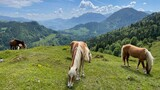 Fototapeta Kawa jest smaczna - Horses On Meadow In The Mountains