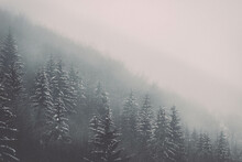 Beautiful View Of The Trees Growing On The Mountain, Covered In Snow On A Gloomy Winter Day