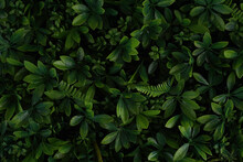 A Close Up Of Green Leaves Background. Nature Concept. Copy Space