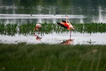 View Of Birds In Lake - Flamingos