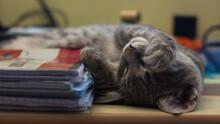 Closeup Of An Adorable Fluffy Gray Kitten Sleeping On A Desk