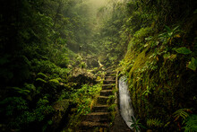 Trail Amidst Trees In Forest And Stony Stairs