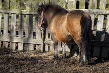 Little Brown Pony In A Wooden Pen Outdoors.