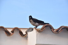 One Bird On The Roof.