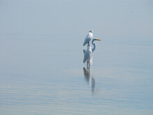 View Of A Bird On The Sea