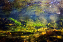 Green Algae Underwater In The River Landscape Riverscape, Ecology Nature