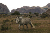 Fototapeta Kawa jest smaczna - View Of A White Horse On Field Against Mountains