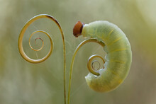 Beautiful Caterpillars With Leaves And Ferns