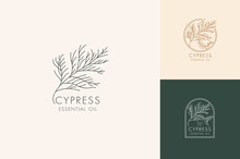 Vector Linear Set Of Botanical Icons And Symbols - Cypress. Design Logos For Essential Oil Cypress. Natural Cosmetic Product.