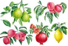Bergamot, Peach, Pomegranate And Lemon, Fruits On Isolated Background, Watercolor Botanical Illustration. Branch Flowers