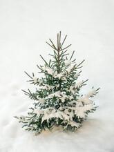 Christmas Tree Under The Snow, Close Up.