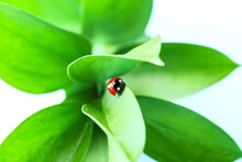 Plant Branch With Cute Ladybug On Color Background