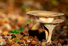 Mushrooms On The Forest Floor In The Nature Protection Area Mönchbruch Near Frankurt, Germany.