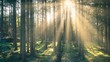 canvas print picture - Im Wald