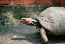 Small Pet Tortoise On The Ground