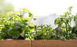 canvas print picture - pflanze