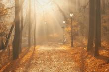 Foggy Alley In The Autumn Park.
